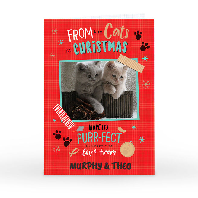 Photo Christmas Card - From The Cats