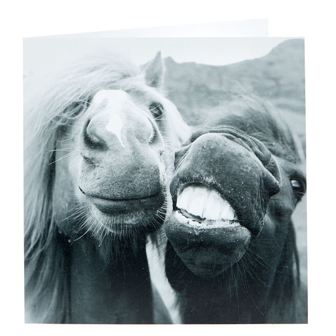 Any Occasion Card - Grinning Horses