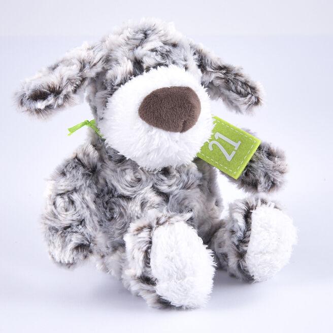 21st Birthday - Grey & White Dog In Gift Bag