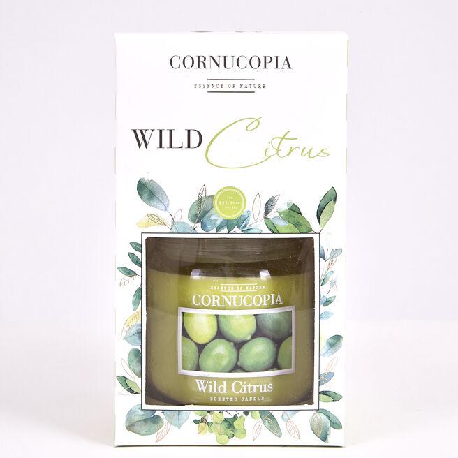 Cornucopia Boxed Wild Citrus Scented Candle