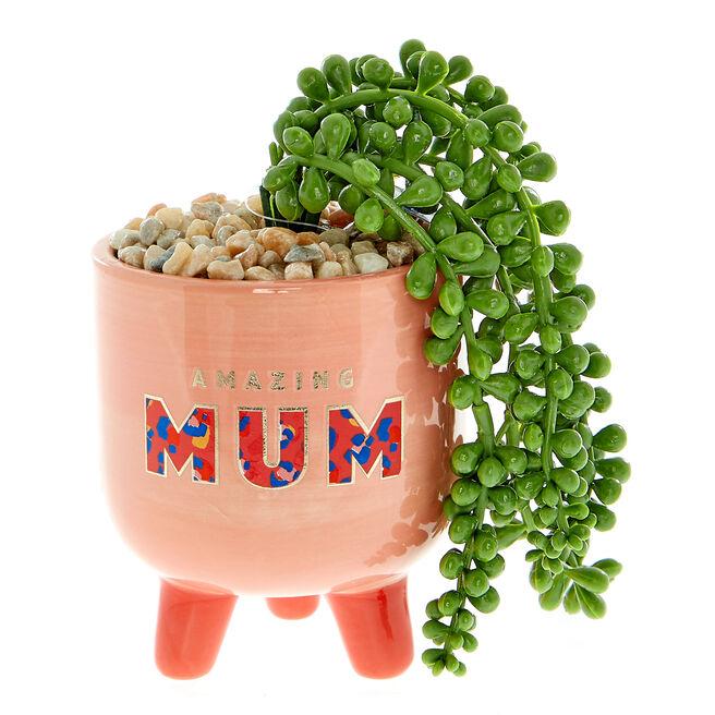 Wild Amazing Mum Planter
