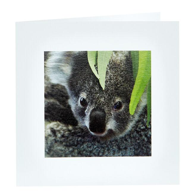 Any Occasion Card - Koala